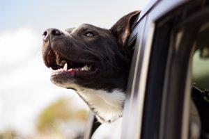 dog-dental-offer-small