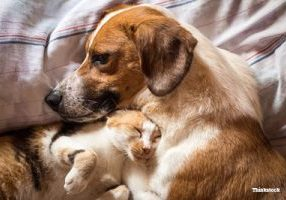 5-discoveries-that-changed-what-we-knew-about-pets-in-2015-482034834